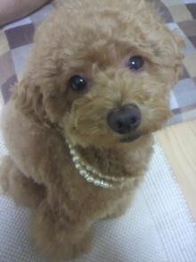 愛犬鈴ちゃん~トイプードル☆ライフスタイル~-2011070221460001.jpg