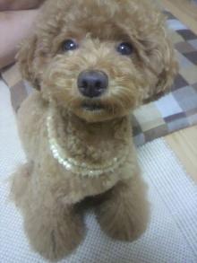 愛犬鈴ちゃん~トイプードル☆ライフスタイル~-2011070221470000.jpg