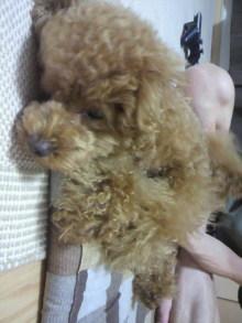 愛犬鈴ちゃん~トイプードル☆ライフスタイル~-2011070222150001.jpg