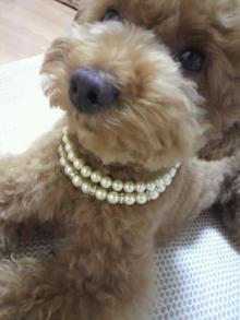 愛犬鈴ちゃん~トイプードル☆ライフスタイル~-2011062216530000.jpg