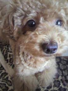 愛犬鈴ちゃん~トイプードル☆ライフスタイル~-2011070415340001.jpg