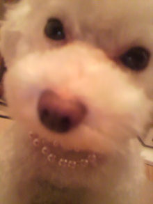 愛犬鈴ちゃん~トイプードル☆ライフスタイル~-2011070121340000.jpg