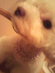 愛犬鈴ちゃん~トイプードル☆ライフスタイル~-2011070121340003.jpg