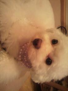 愛犬鈴ちゃん~トイプードル☆ライフスタイル~-2011070121330000.jpg