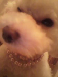 愛犬鈴ちゃん~トイプードル☆ライフスタイル~-2011070121340001.jpg