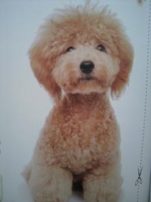 愛犬鈴ちゃん~トイプードル☆ライフスタイル~-2011070309140000.jpg