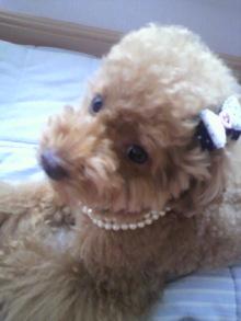 愛犬鈴ちゃん~トイプードル☆ライフスタイル~-2011070614510001.jpg