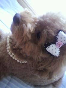 愛犬鈴ちゃん~トイプードル☆ライフスタイル~-2011070614520000.jpg