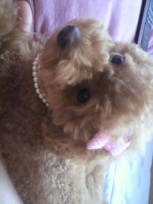 愛犬鈴ちゃん~トイプードル☆ライフスタイル~-2011070614550000.jpg