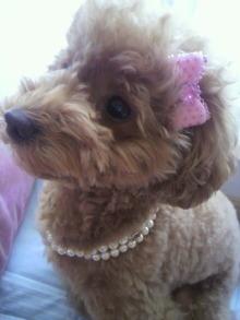 愛犬鈴ちゃん~トイプードル☆ライフスタイル~-2011070614560000.jpg