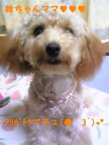 愛犬鈴ちゃん~トイプードル☆ライフスタイル~-110707_144955_ed.jpg
