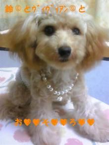 愛犬鈴ちゃん~トイプードル☆ライフスタイル~-110707_144527_ed.jpg