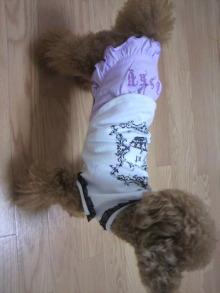 愛犬鈴ちゃん~トイプードル☆ライフスタイル~-2011071019390001.jpg