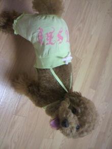 愛犬鈴ちゃん~トイプードル☆ライフスタイル~-2011071019400000.jpg
