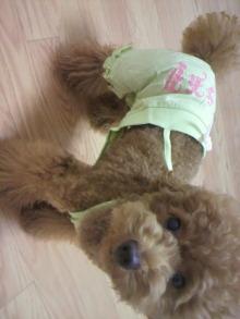 愛犬鈴ちゃん~トイプードル☆ライフスタイル~-2011071019400001.jpg