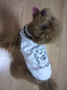 愛犬鈴ちゃん~トイプードル☆ライフスタイル~-2011071019420000.jpg