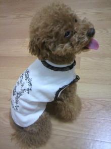 愛犬鈴ちゃん~トイプードル☆ライフスタイル~-2011071019420002.jpg