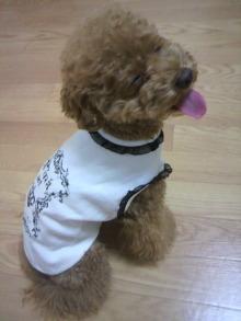 愛犬鈴ちゃん~トイプードル☆ライフスタイル~-2011071019420001.jpg