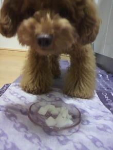愛犬鈴ちゃん~トイプードル☆ライフスタイル~-2011071019460000.jpg
