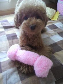 愛犬鈴ちゃん~トイプードル☆ライフスタイル~-2011071114150001.jpg