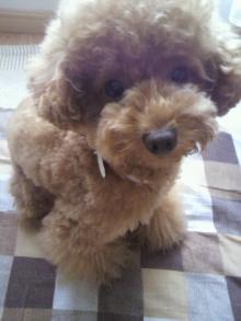 愛犬鈴ちゃん~トイプードル☆ライフスタイル~-2011071211330000.jpg