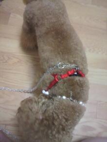 愛犬鈴ちゃん~トイプードル☆ライフスタイル~-2011071218450002.jpg