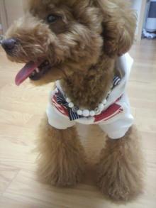 愛犬鈴ちゃん~トイプードル☆ライフスタイル~-2011071218480001.jpg