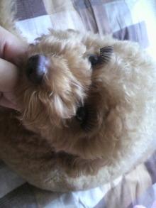 愛犬鈴ちゃん~トイプードル☆ライフスタイル~-2011071312430000.jpg