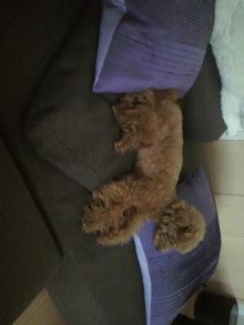 愛犬鈴ちゃん~トイプードル☆ライフスタイル~-2011071418130001.jpg