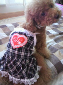 愛犬鈴ちゃん~トイプードル☆ライフスタイル~-2011071509380000.jpg