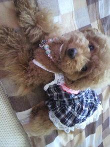 愛犬鈴ちゃん~トイプードル☆ライフスタイル~-2011071509370000.jpg