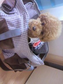 愛犬鈴ちゃん~トイプードル☆ライフスタイル~-2011071509390002.jpg