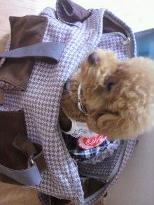 愛犬鈴ちゃん~トイプードル☆ライフスタイル~-2011071509390003.jpg