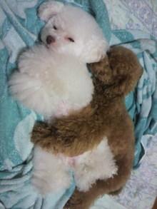 愛犬鈴ちゃん~トイプードル☆ライフスタイル~-2011061623500000.jpg