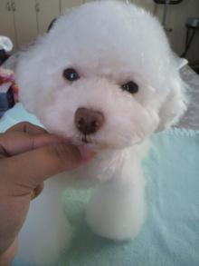 愛犬鈴ちゃん~トイプードル☆ライフスタイル~-2011071615450002.jpg