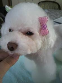 愛犬鈴ちゃん~トイプードル☆ライフスタイル~-2011071615480001.jpg