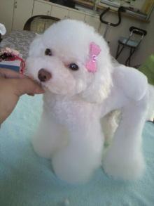 愛犬鈴ちゃん~トイプードル☆ライフスタイル~-2011071615490000.jpg