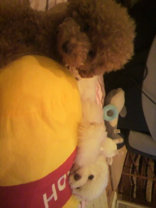愛犬鈴ちゃん~トイプードル☆ライフスタイル~-2011071619060000.jpg