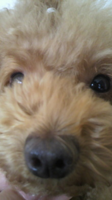 愛犬鈴ちゃん~トイプードル☆ライフスタイル~-2011072215050000.jpg