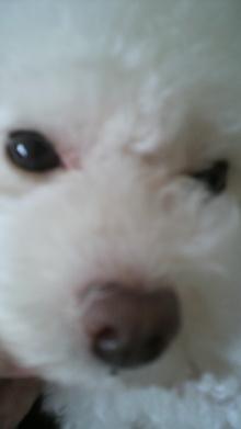 愛犬鈴ちゃん~トイプードル☆ライフスタイル~-2011072215050001.jpg