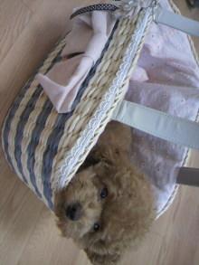 愛犬鈴ちゃん~トイプードル☆ライフスタイル~-2011072513390001.jpg