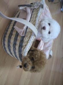 愛犬鈴ちゃん~トイプードル☆ライフスタイル~-2011072513410002.jpg