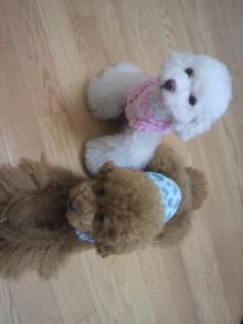 愛犬鈴ちゃん~トイプードル☆ライフスタイル~-2011072513460000.jpg