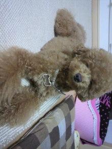 愛犬鈴ちゃん~トイプードル☆ライフスタイル~-2011072520210000.jpg