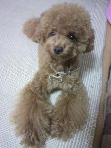 愛犬鈴ちゃん~トイプードル☆ライフスタイル~-2011072520200000.jpg