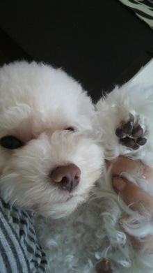 愛犬鈴ちゃん~トイプードル☆ライフスタイル~-2011072715470000.jpg
