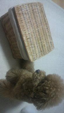 愛犬鈴ちゃん~トイプードル☆ライフスタイル~-2011072821440000.jpg