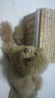 愛犬鈴ちゃん~トイプードル☆ライフスタイル~-2011072821450000.jpg