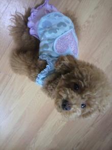 愛犬鈴ちゃん~トイプードル☆ライフスタイル~-2011072908490000.jpg