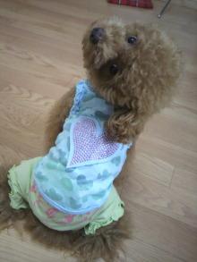 愛犬鈴ちゃん~トイプードル☆ライフスタイル~-2011072908530001.jpg